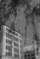 「柳と時計塔」画像
