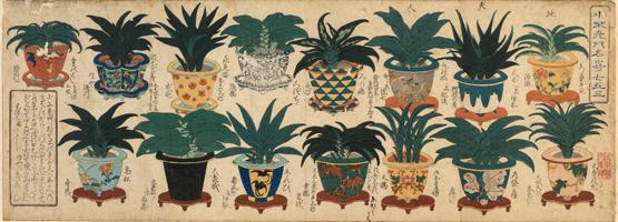 関根雲停画「小不老草名寄」天保3年(1832)雑花園文庫蔵
