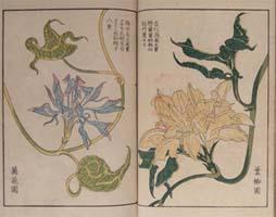 萬花園主人撰・服部雪斎画「朝顔三十六花撰」嘉永7年(1854) 当館蔵
